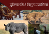 दुनियां की 5 विलुप्त प्रजातियां